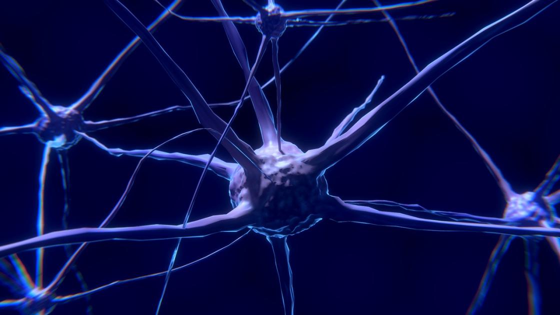 Investiga neurona