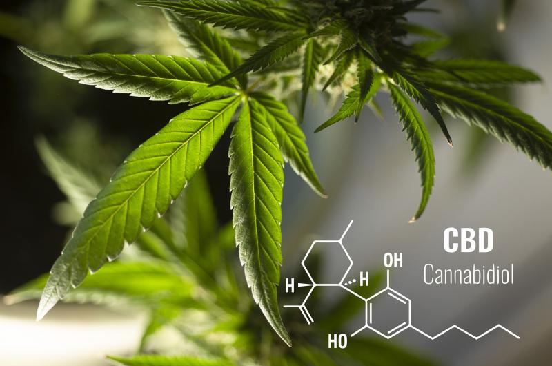 FIDMAG Inicia l'Estudi Cànnabis